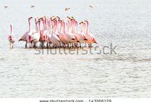 Flamingos by Curioso