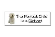 Bichons and more cute animals! / by Leslie Cooper