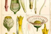 Botanical Drawings / by Rhonda Stephens