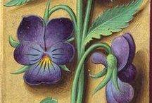 Medieval botany