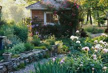 Garden / by Taryn Domingos
