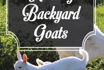 Backyard Farming / #backyardfarming #farming