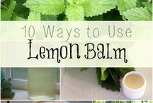Lemon Balm / by Herb Society of America