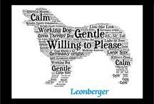 my Leonberger
