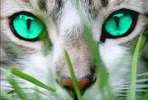 Warrior catsssssssssssss / CATS MEOW MEOW MOEW