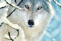 dieren in winter / dieren in winter