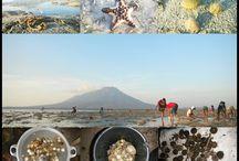 Beach & Sea