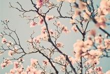 Tavasz.
