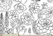 pozsgás rajzábrázolás, succulent clip art / pozsgás rajzábrázolás, succulent clip art