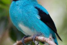portafolio aves exoticas 2019