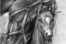 paarden tekenen