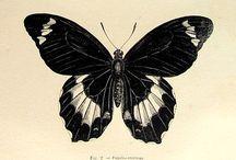 Vlinder Illustratie & Book Cover Inspiratie