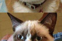 Grumpy cat laughs for me