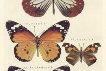 Я люблю бабочки. / Бабочки в любом стиле. Главное что бы красивые