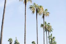 palm trees travel cali