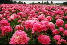 favorite flowers/plants/herbs / by Veronica Kalashnik