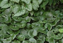 Farrar Plant Options2