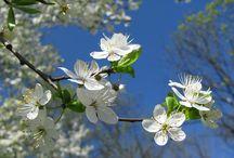 wiosna spring