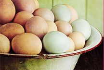 Eggs for Orphans / A life sustaining project to feed over 4,000 orphans. The EGG is a remarkable source of health - Riboflavin, Vitamin B12 and Phosphorus, Protein and Selenium. All critical for children in India to survive.