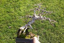 garden_bonsai