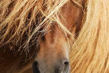 Horses galore