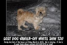Lost Pets Vanier, Ottawa, Ontario
