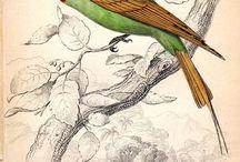 птицы ботаника