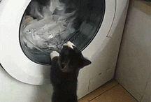 Legrační koťátka