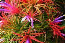 Bellezas en flor