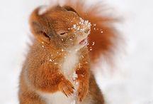 Squirrels / Eekhoorntjes