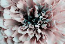 -- Pastels --