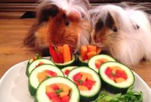 guinea pigs ideas
