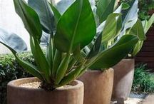 plantas e jardim