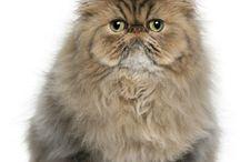 cute furry animals