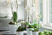 orchids... growing it!
