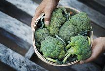 Broccoli Misc & Uses