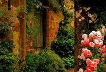 kertkapu+növény