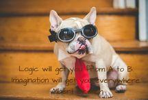 Took the dog quotes Albert Einstein / www.jengregorski.com