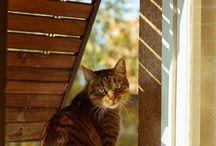Hay un gato en la ventana...
