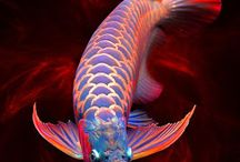 FISH / All Kinds Of Aquarium &Pond Fish ! / by Mykkadri Enterprises