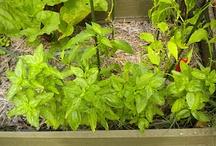 My garden's bounty!