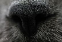 photos d'animaux / photos d'animaux