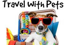 Road Trip / Traveling with your pet.