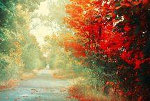 Seasons.  / by Melanie Vargas