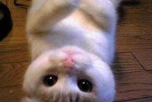 Omg tooooo cute! / by Abby Lydon