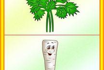 warzywa - tablice