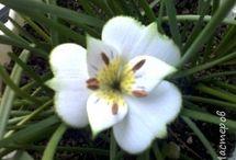 Цветы из фоамирана. МК / Увидела как-то розочки из фоамирана и страло интересно, а какие еще цветы делают? Вот и итог