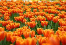 """Orange / """"Orange is the happiest colour"""" - Frank Sinatra"""
