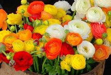 Kukkakimput- ja asetelmat/Bouquets and flower arrangement