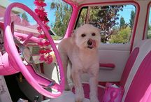 Things in Pink / I am a pinky and love the color pink! So here are things I find that I love and are pink.